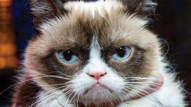 Be ready for any grumpy cat